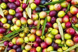 """Aceites Cazorla S.C.A. obtiene el distintivo de calidad """"Degusta Jaén Calidad"""""""