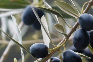 """El aceite de oliva virgen extra con DO """"Sierra de Cazorla"""" se da a conocer en diferentes localidades de Valladolid"""